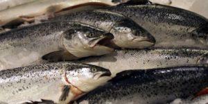 13 Manfaat Ikan Salmon untuk Kesehatan